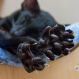 Кошачьи пятки