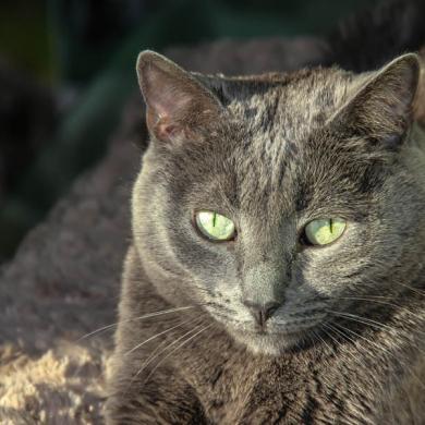 Красивая беспородная кошка