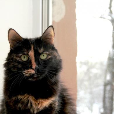 Красивая лохматая кошка