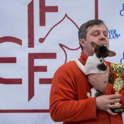 Участие в выставке кошек. Питомник ориентальных кошек в Москве. Купить ориентального котёнка.Ориентальные кошки. Ориентальный котёнок. Истории о кошках. Фото ориентальных кошек.