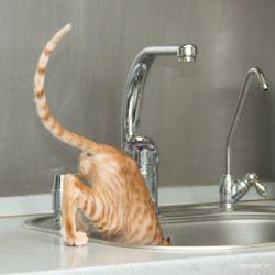 Питомник ориентальных кошек в Москве. Ориентальный кот. Купить котёнка.Истории и фотографии о жизни кошек.