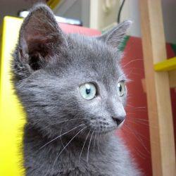 Красивая кошка - подобранец