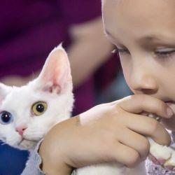 Выставка кошек. Питомник ориентальных кошек в Москве. Купить ориентального котёнка.Ориентальные кошки. Ориентальный котёнок. Истории о кошках. Фото ориентальных кошек.