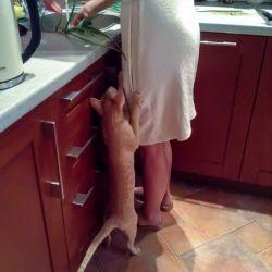 Ориентальная кошка просит зелёный лук