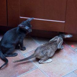 Два любопытных ориентальных котёнка проверяют - что шумит в посудомойке?