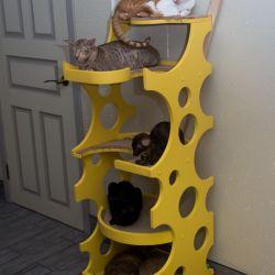 Купить ориентального котёнка. Ориентальные кошки. Ориентальные котята. Питомник ориентальных кошек в Москве. Комплексы для кошек. Когтеточка для кошки.