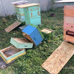 пчёлы, упал улий