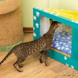 Дом для кошки. Дом для кота. Когтеточка купить. Комплексы для кошек. Мебель для кошек.